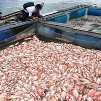 Cá chết trắng sông Cổ Cò: Dân nghi cống xả thải gây ô nhiễm