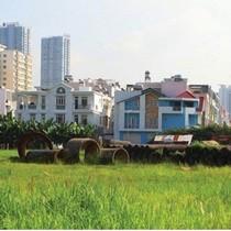TP.HCM: Kiến nghị chuyển mục đích sử dụng đất 35 dự án có diện tích trồng lúa từ 10ha trở lên