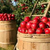 """Những cổ phiếu đem về """"trái ngọt"""" cho V.N.M ETF trong chưa đầy 6 tháng  """