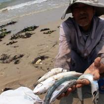 Hôm nay Chính phủ công bố thủ phạm gây cá chết hàng loạt ở miền Trung