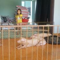 Lợn gà lên nhà tầng, người chui xuống nhà kho