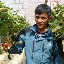 Thu tiền tỷ từ trồng dâu New Zealand trên giá thể xơ dừa