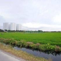 Đô thị có cần đất nông nghiệp?