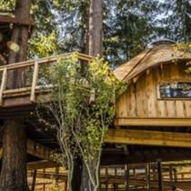 Văn phòng treo trên cây của Microsoft