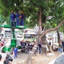 Đánh chuyển cây xanh trên Phạm Văn Đồng lãng phí hơn trồng mới