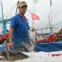 Tránh bão, tàu cá vào bờ ít, nhiều ngư dân bán cá kiếm cả trăm triệu đồng