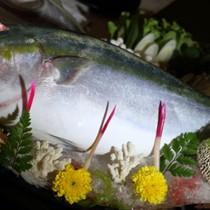 """""""Cá năm mới"""" Nhật: Giá tiền triệu"""