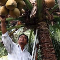 Kiếm hàng trăm triệu đồng từ trồng dừa, trồng sen
