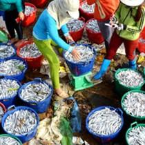 [Video] Ngư dân kiếm hơn 100 triệu đồng sau đêm đánh cá cơm đầu năm