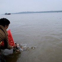 Đề nghị Bộ Công an vào cuộc vụ phóng sinh cá ngoại lai vào sông Hồng