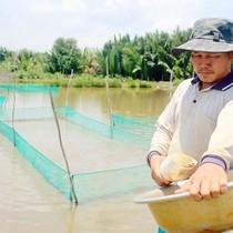Thu tiền tỷ từ nuôi cá cảnh