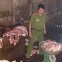 Thu mua heo bệnh rồi giết thịt, bỏ mối cho các chợ