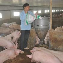 """Mất 100.000 tỷ vì khủng hoảng thịt lợn: Gửi """"tâm thư"""" kêu lên Thủ tướng"""