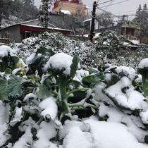 Mùa đông năm nay rét nhất trong 100 năm qua?
