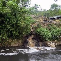 Dong riềng Điện Biên: Đầu ra chưa ổn định đã gây ô nhiễm môi trường