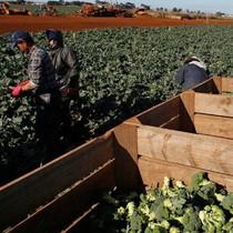 Lao động Việt bị bóc lột tiền lương tại Úc