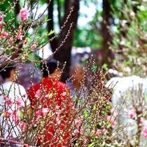 Thời tiết mồng 1 Tết: Bắc Trung Bộ có mưa phùn nhẹ, Nam Bộ nắng ấm