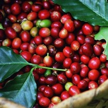Ấn Độ gỡ bỏ lệnh cấm nhập khẩu nhiều nông sản Việt