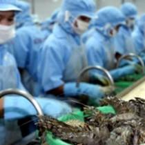 Tiếp tục thúc Úc bãi bỏ lệnh tạm ngừng nhập khẩu tôm chưa nấu chín