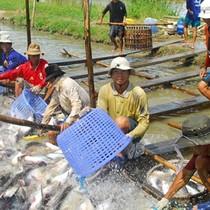 Top doanh nghiệp xuất khẩu thủy sản lớn: Vĩnh Hoàn sụt mạnh, Minh Phú trở lại dẫn đầu