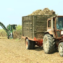 Vietnam Private Sugar Maker Plans Singapore Listing – Report