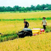 Foreign Investment in Vietnam's Agriculture Remains Limited