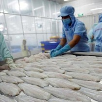 [Round-up] Association Protests U.S.'s Heavy Anti-dumping Levy on Vietnam's Pangasius