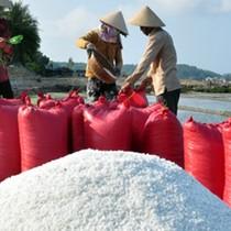 Giá muối xuống dưới 1.000 đồng/kg vẫn ế