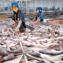 Số phận cá da trơn sẽ được quyết định trong tháng 4/2015