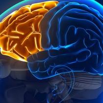 Bật mí 5 phương pháp giúp kích thích trí nhớ hiệu quả