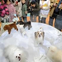 Chăm sóc thú cưng một ngành công nghiệp tỷ USD tại Trung Quốc