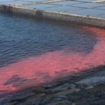 """Hà Tĩnh: Xuất hiện dải nước """"lạ"""" màu đỏ tại cảng Sơn Dương - Vũng Áng"""