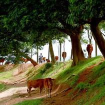 Hà Nội: Trả giá vì xã lên phường nhưng hạ tầng vẫn... nông thôn