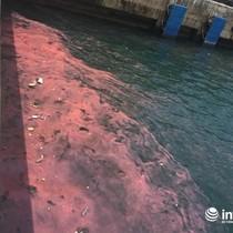 Hà Tĩnh: Lại xuất hiện dải nước đỏ tại cảng Sơn Dương