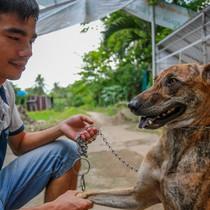 [Video] Trại chó Phú Quốc thu 700 triệu đồng mỗi năm ở Sài Gòn
