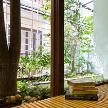 Ngôi nhà Hà Nội đục thủng ban công cho cây xuyên qua