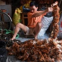 Nghề làm chổi lông gà Việt Nam lên báo Pháp