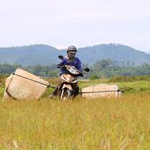 [Video] Chạy xe máy bắt châu chấu kiếm tiền triệu mỗi ngày