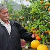 [Video] Lão nông ghép 11 loại quả trên cây bưởi, kiếm hơn nửa tỷ một năm