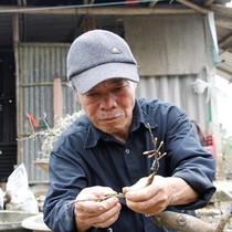 [Video] Lão nông thu lãi hàng trăm triệu đồng mỗi năm nhờ trồng Hoàng mai