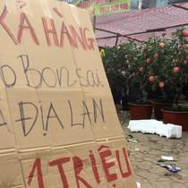 [Video] Cửa hàng cây cảnh Hà Nội đua treo biển giảm giá