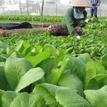 """Thị trường 24h: """"Tù mù"""" sản phẩm gắn mác nông nghiệp hữu cơ"""