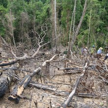 Bắt nguyên giám đốc Ban quản lý rừng phòng hộ Sông Tranh