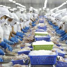 [Chân dung doanh nghiệp] Vĩnh Hoàn được lợi gì từ TPP?