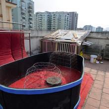 Cảnh nuôi gà, trồng rau trong chung cư ở Hà Nội
