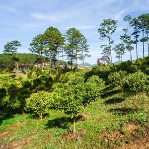 """[BizSTORY] Chủ nhân khu du lịch Đasar: 10 năm bỏ phố đi giữ """"trái tim"""" rừng"""