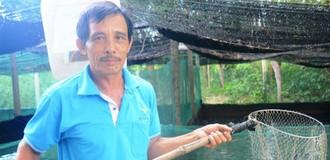 Lãi cao từ nuôi cá lóc trong ao lót bạt