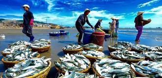 """Châu Âu """"rút thẻ vàng"""" với hải sản Việt Nam"""