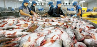 Trung Quốc là khách hàng lớn nhất của cá tra Việt: Mừng hay lo?