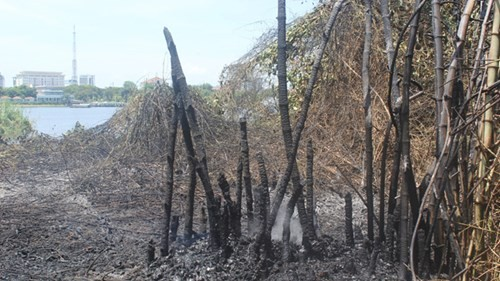 Công viên cháy dữ dội, khói mù mịt cả một vùng - ảnh 1